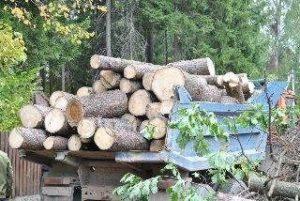 Вывоз спиленных деревьев