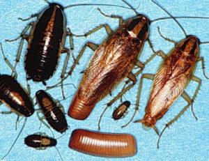 Уничтожение тараканов в квартире
